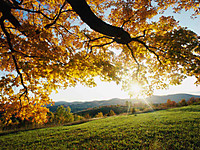Autumn_leaves_4